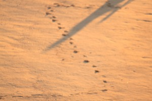 Footprints by Oscar Roca