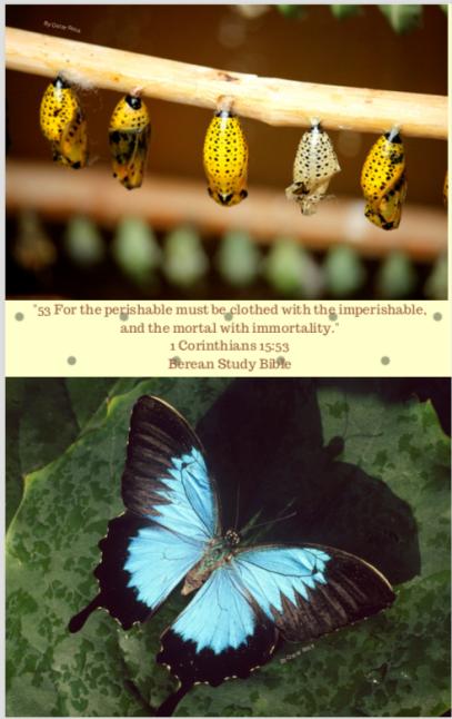Metamorphisis.png
